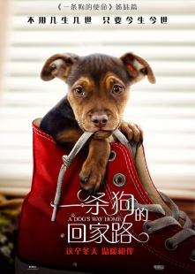 一条狗的回家路海报图片